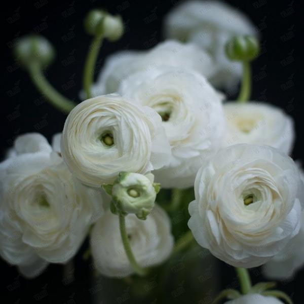 Кливия цветы купить в омске недорого с доставкой оптовым